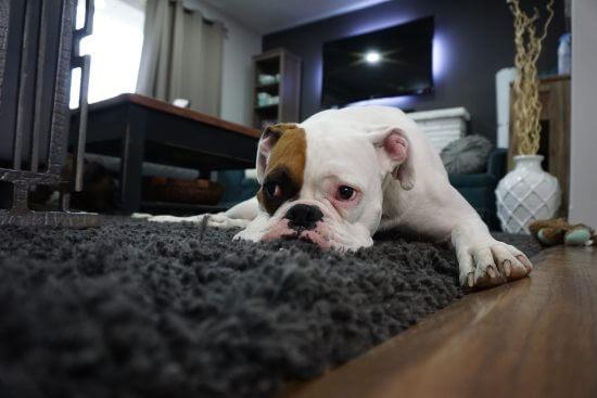 best carpet cleaner lynn ma